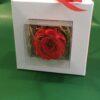 Rosa Stabilizzata in scatola