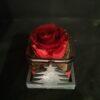 Rosa stabilizzata rossa in vasetto natalizio